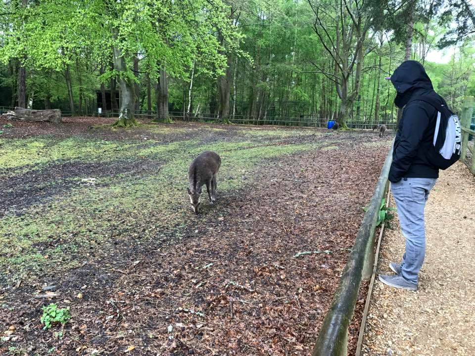 New Forest Wildlife Park Day Out Review at http://lukeosaurusandme.co.uk